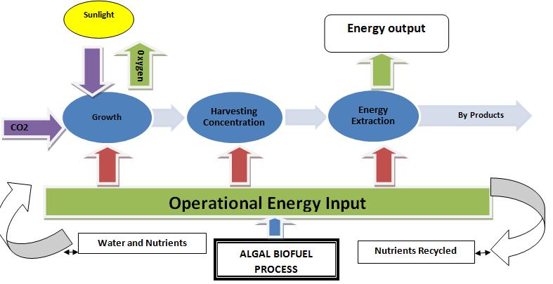 Algae Fuel Market